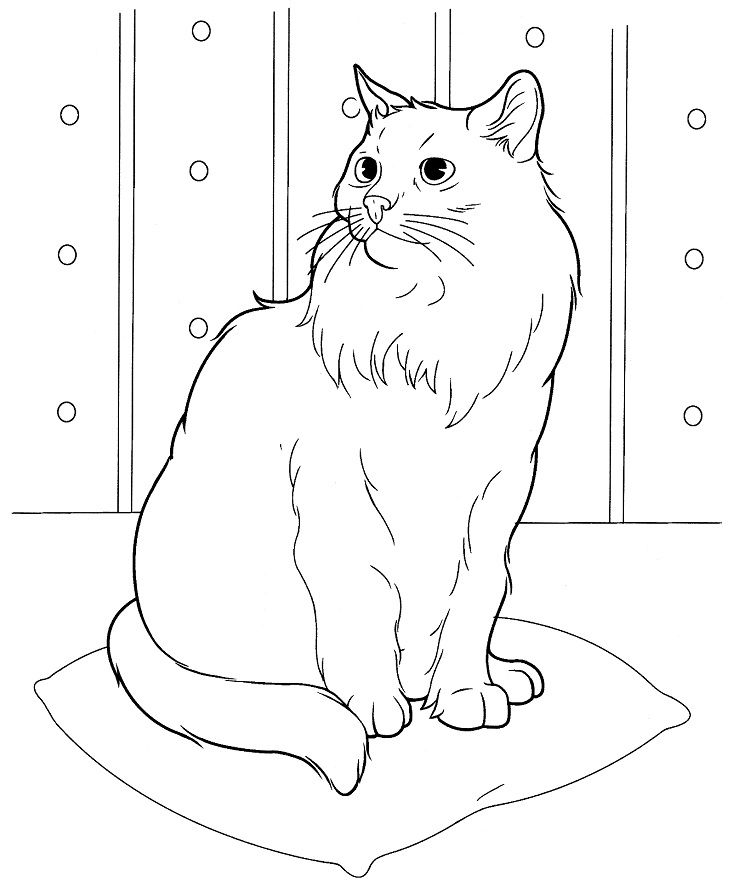 Cat Coloring Pages Realistic Cat Coloring Page Cat Colors Coloring Pictures