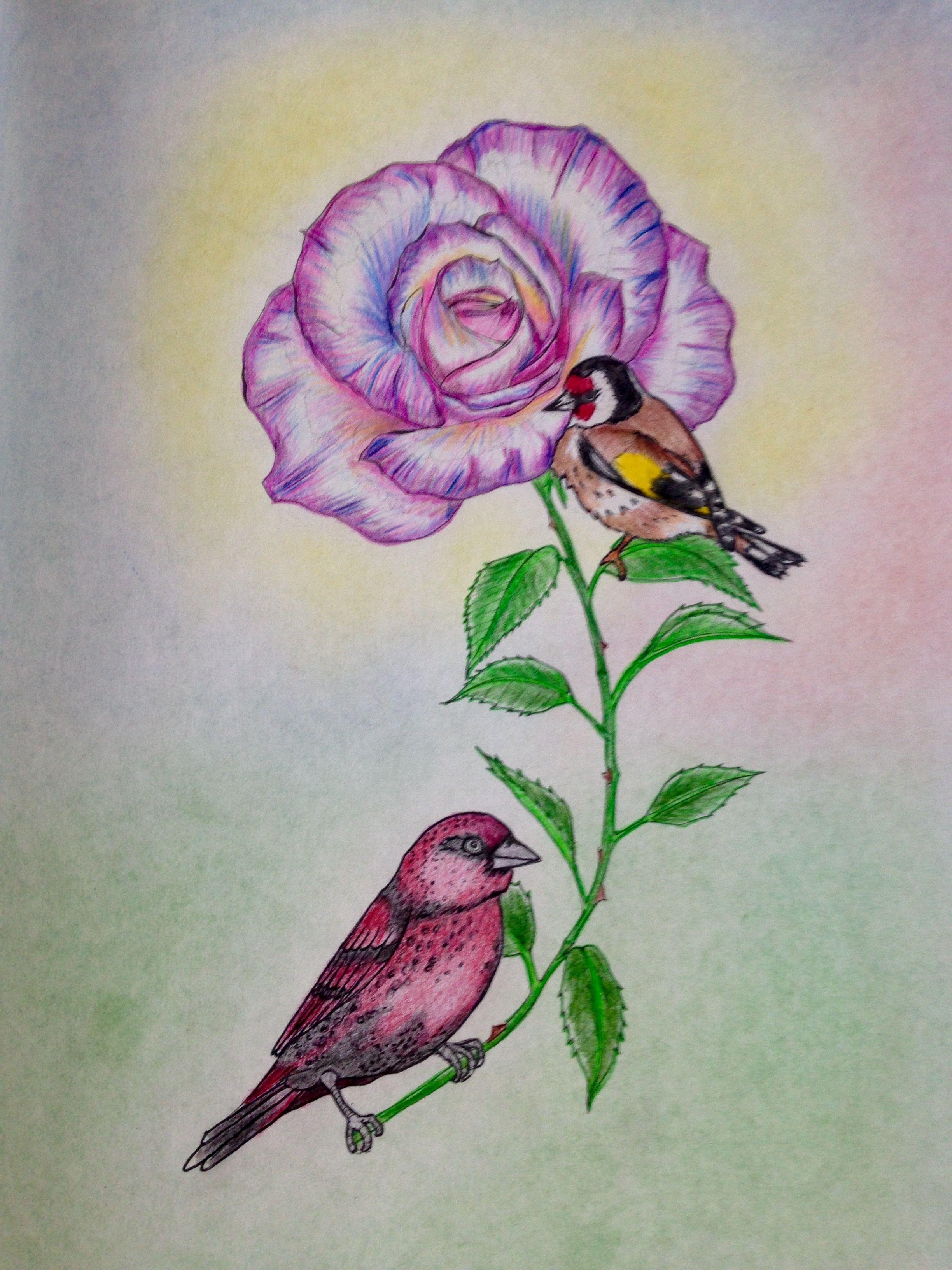Coloring Book Birdtopia Daisy Fletcher Coloring Books Colored Pencil Techniques Drawings