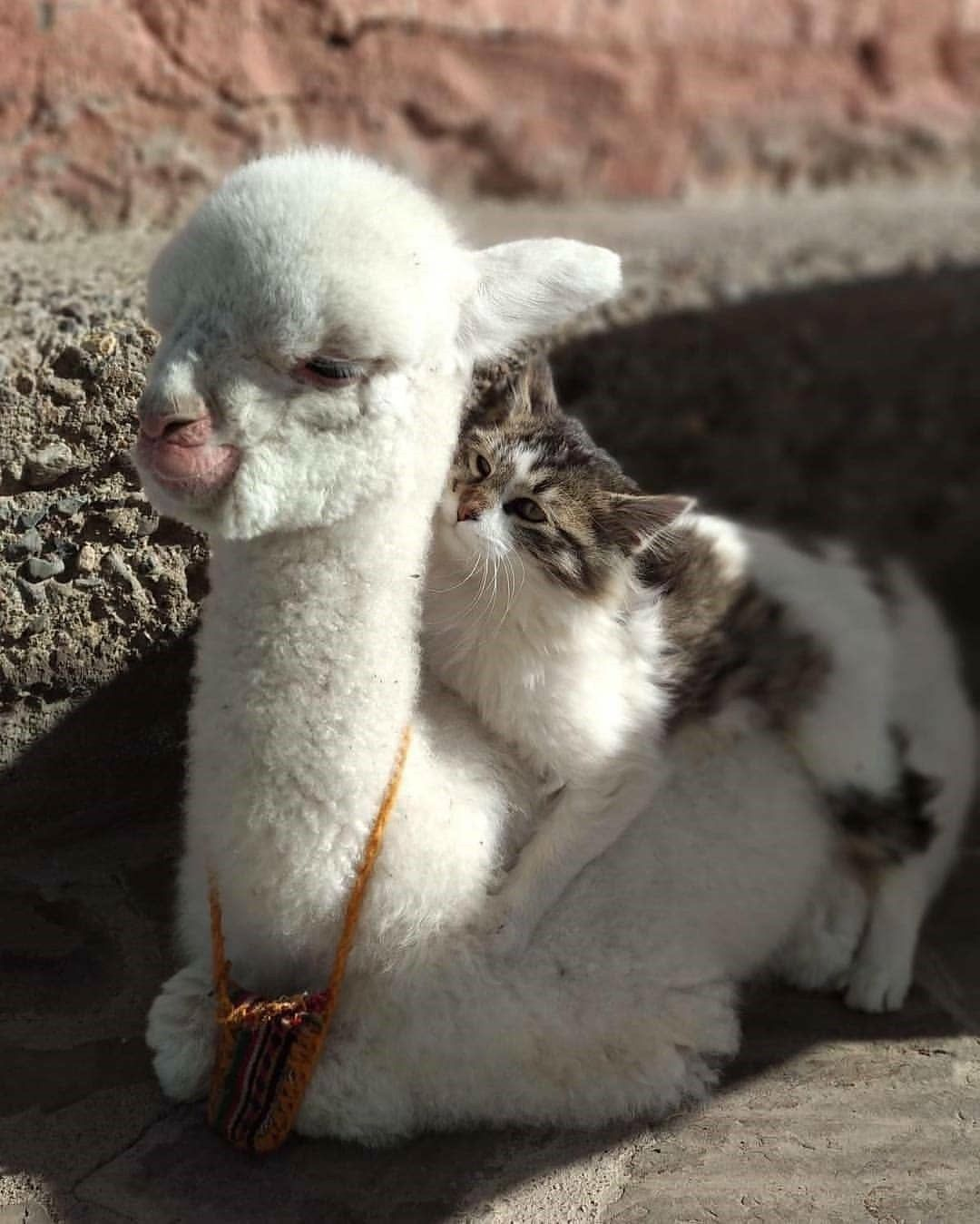 funny-kittens
