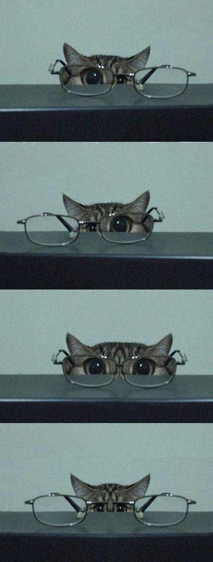 kitty & glasses