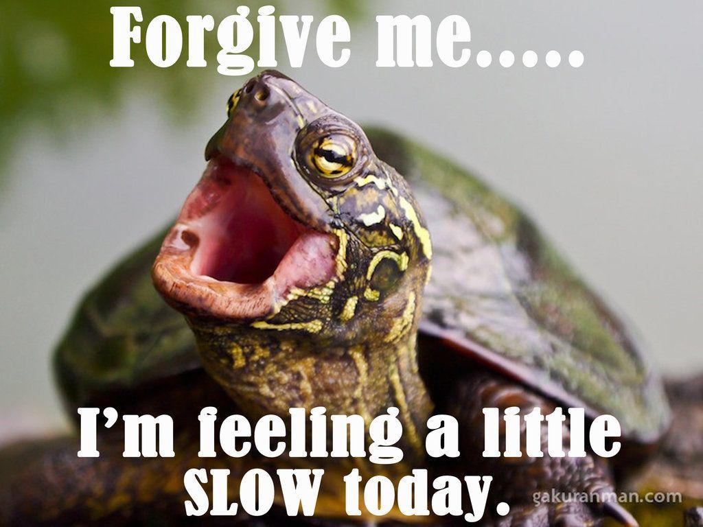 3b6b3bcc622483fe5ef509789b61c456 this little guy expresses my sentiments far too often lol so