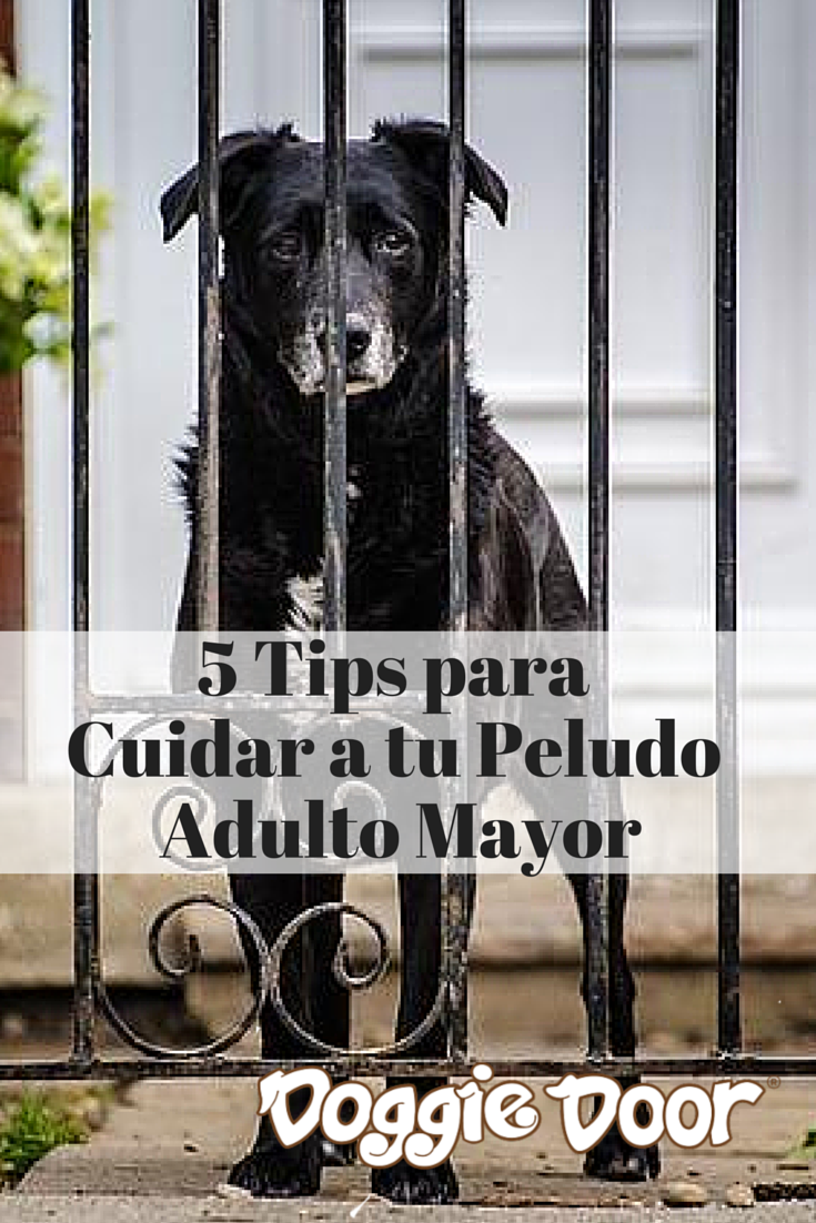 Algunos tips para los peludos que han estado con ustedes desde hace mucho tiempo y ahora requieren de ciertos cuidados especiales. http://blog.doggiedoor.com.mx/tips_de_pancho/5-tips-de-pancho-para-cuidar-a-tu-peludo-adulto-mayor/