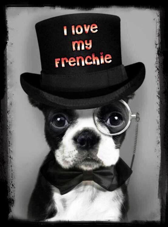 I ❤️ my frenchie Spyke