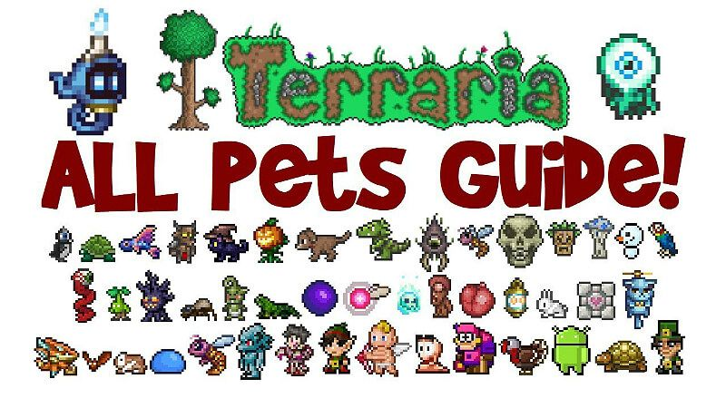 Pet List And Where To Find Them Terraria Terrarium Pets Pet Spider