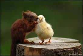 love or frendship