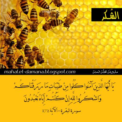مدونة محلة دمنة نصيحة في آية الشكر Ramadan Holy Quran Blog