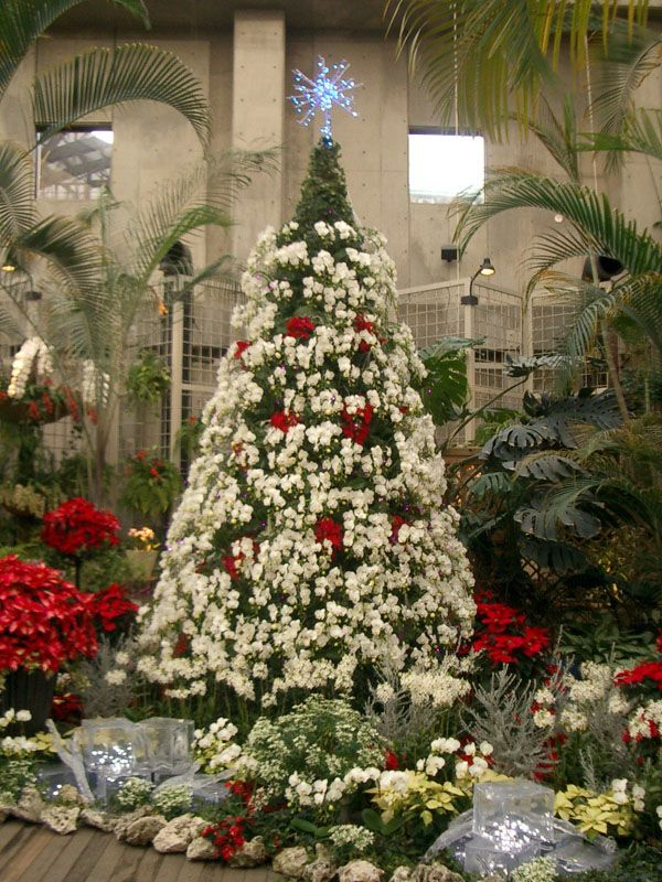 Orchid Christmas Tree.White Orchid Christmas Tree Orchids Christmas