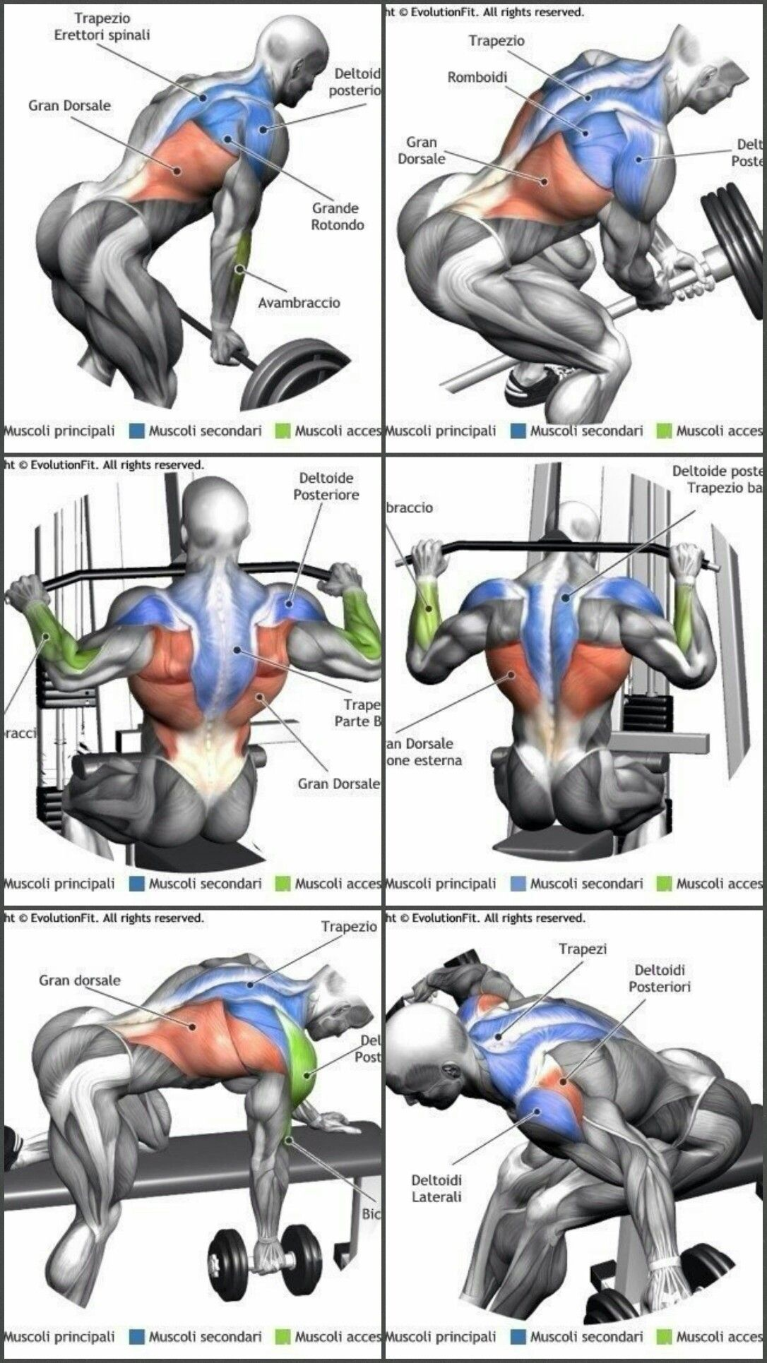 Upper Back Weight Exercises Back Weight Exercises Weights Workout Gym Workout Tips