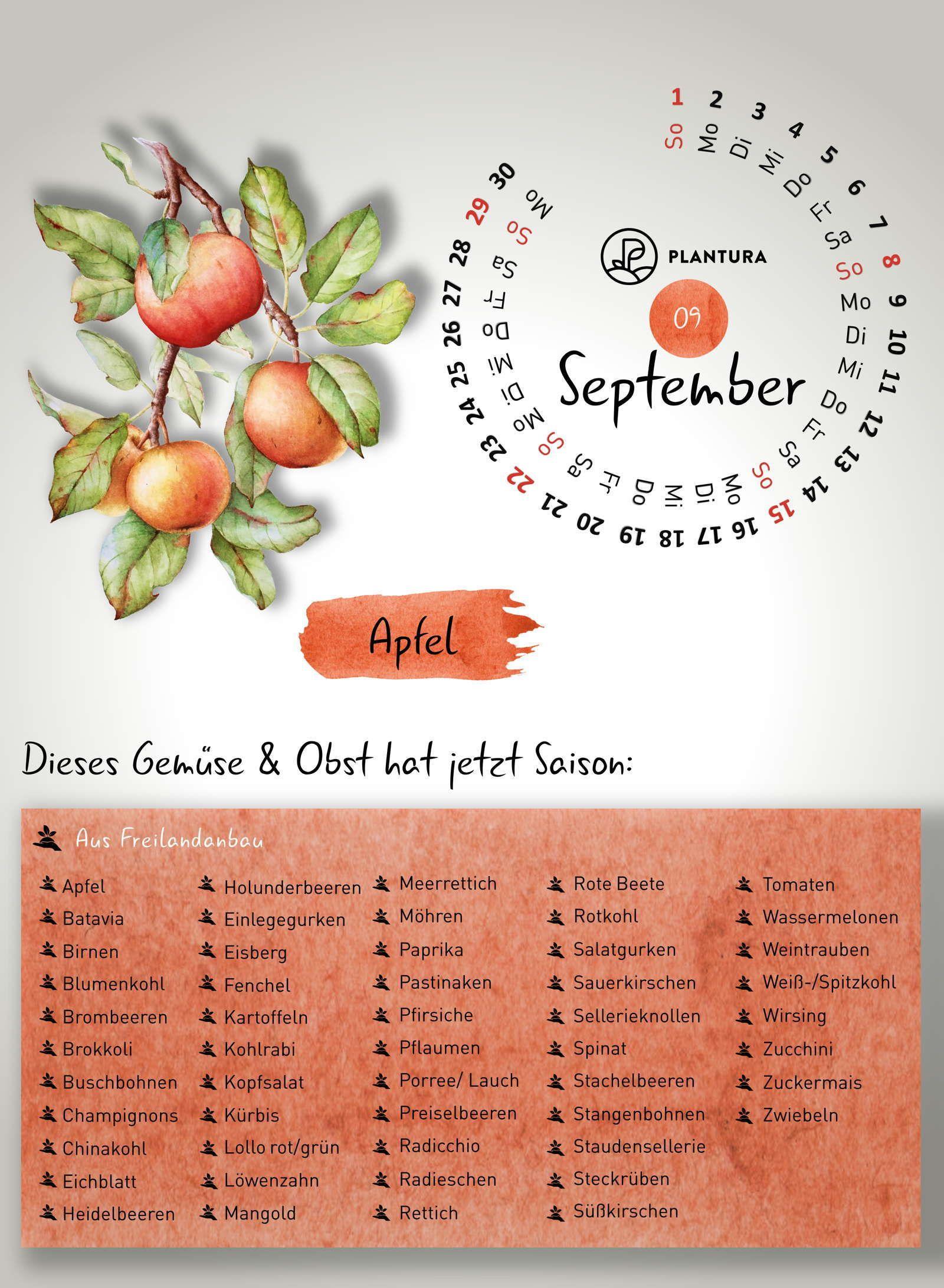 saisonkalender wann w chst welches gem se obst saisonkalender gem se obst und saisonkalender