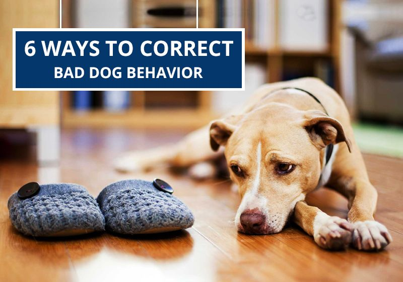 Pin on dog care tips