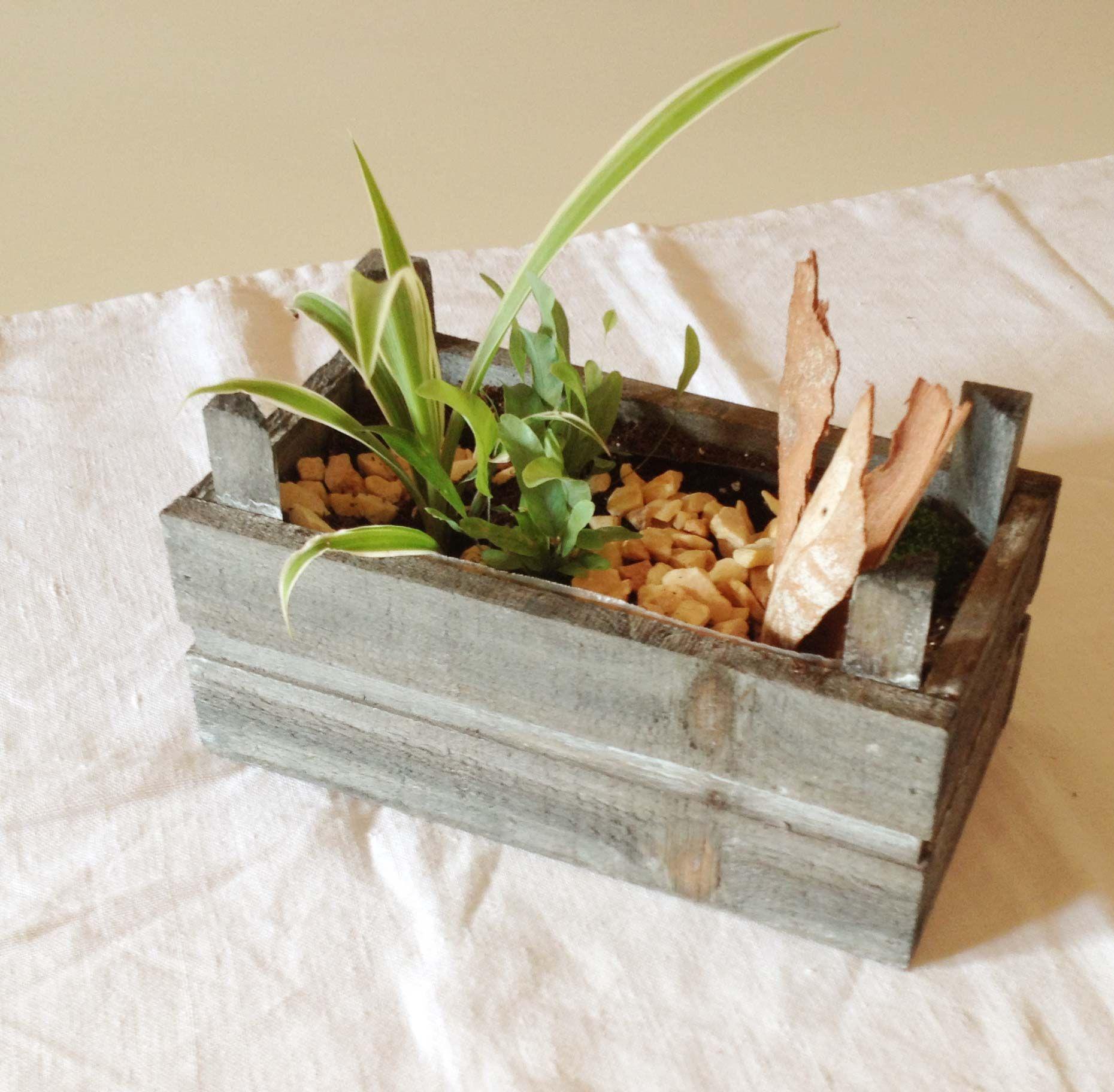 Qualsevol capsa de fusta és bona per a fer un mini jardí. Bones idees a l'Espai Can Mir.
