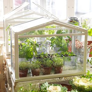 ikea socker indoor miniature greenhouse plants pinterest garten gem segarten und mini. Black Bedroom Furniture Sets. Home Design Ideas