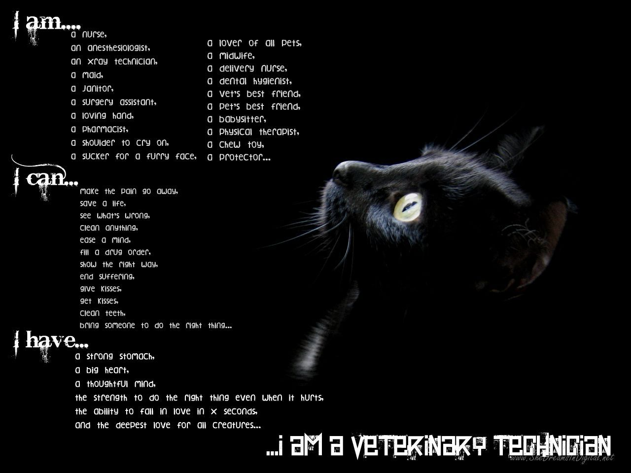 i am a vet tech (and proud!) | cvt | pinterest | tech, veterinary, Human Body