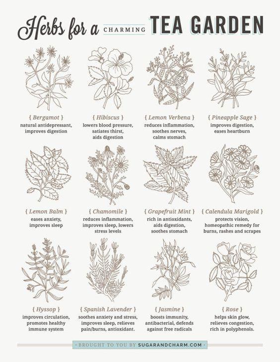 Photo of Nine Favorite Things. – Half Baked Harvest