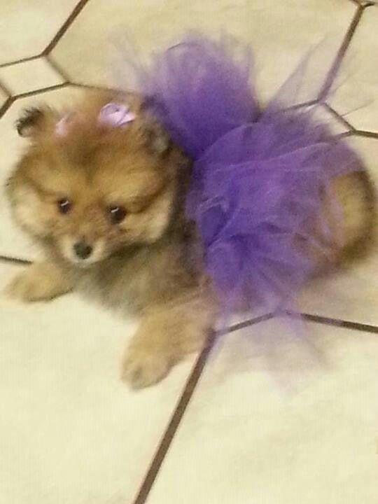 A FB friends dog so cute