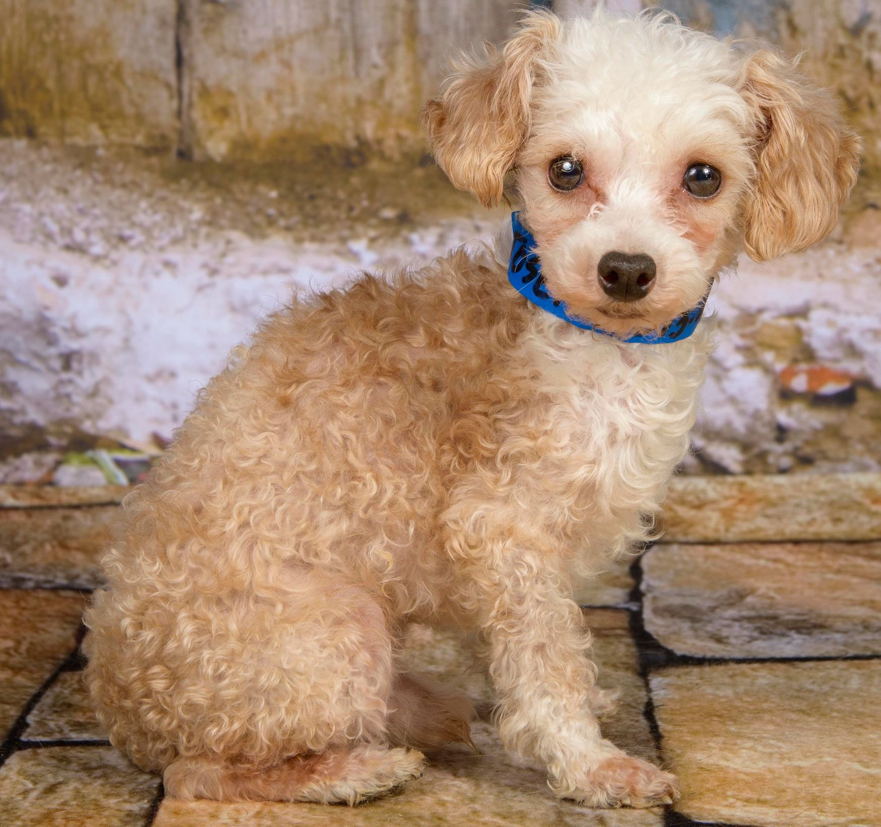 Hermes is a puppy mill survivor who was rescued by