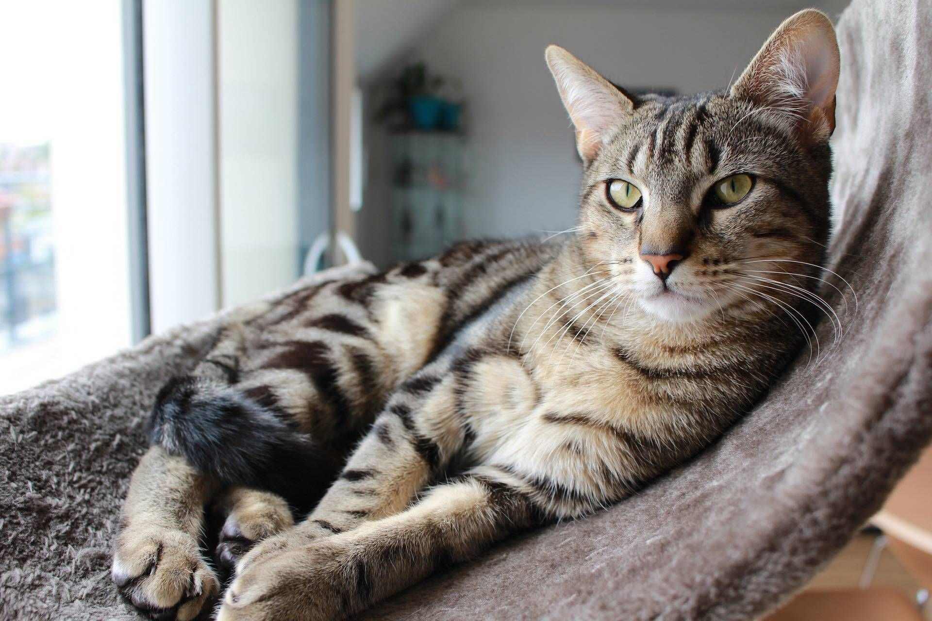 7 Ways to Create a Purrfect Home for Your cat! | Cats, Cats ...