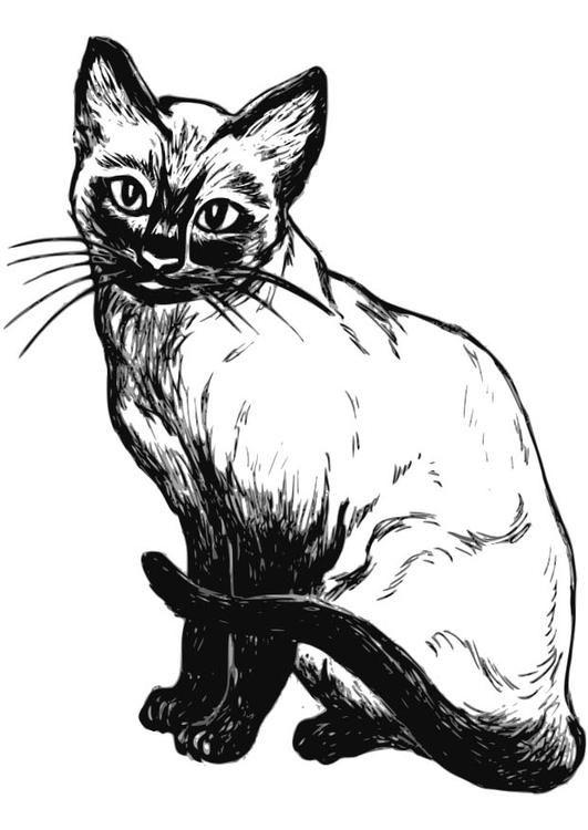 Malvorlage Katze. Bilder für Schule und Unterricht: Katze ...