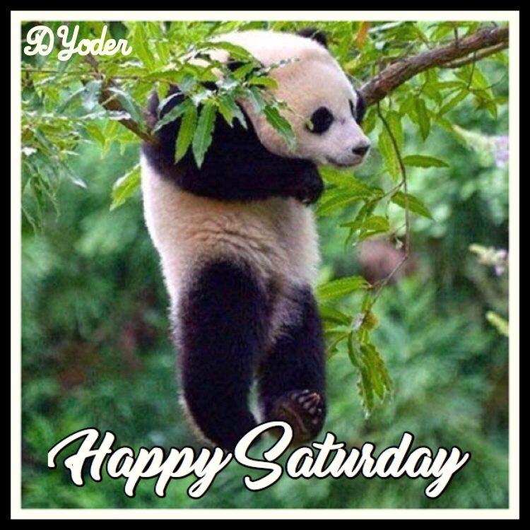 Happy Saturday Panda Bear Panda bear, Panda tour, Panda