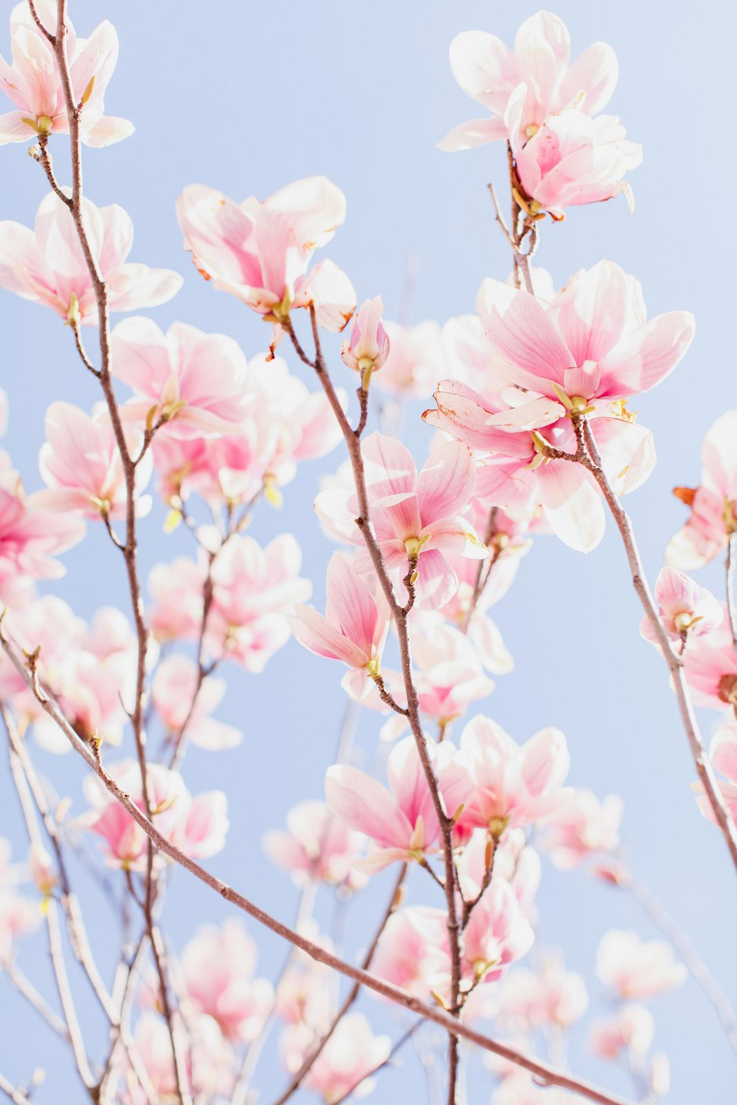 16fd6ee636 All sizes   Cherry Blossoms   Flickr - Photo Sharing!   Flowers ...