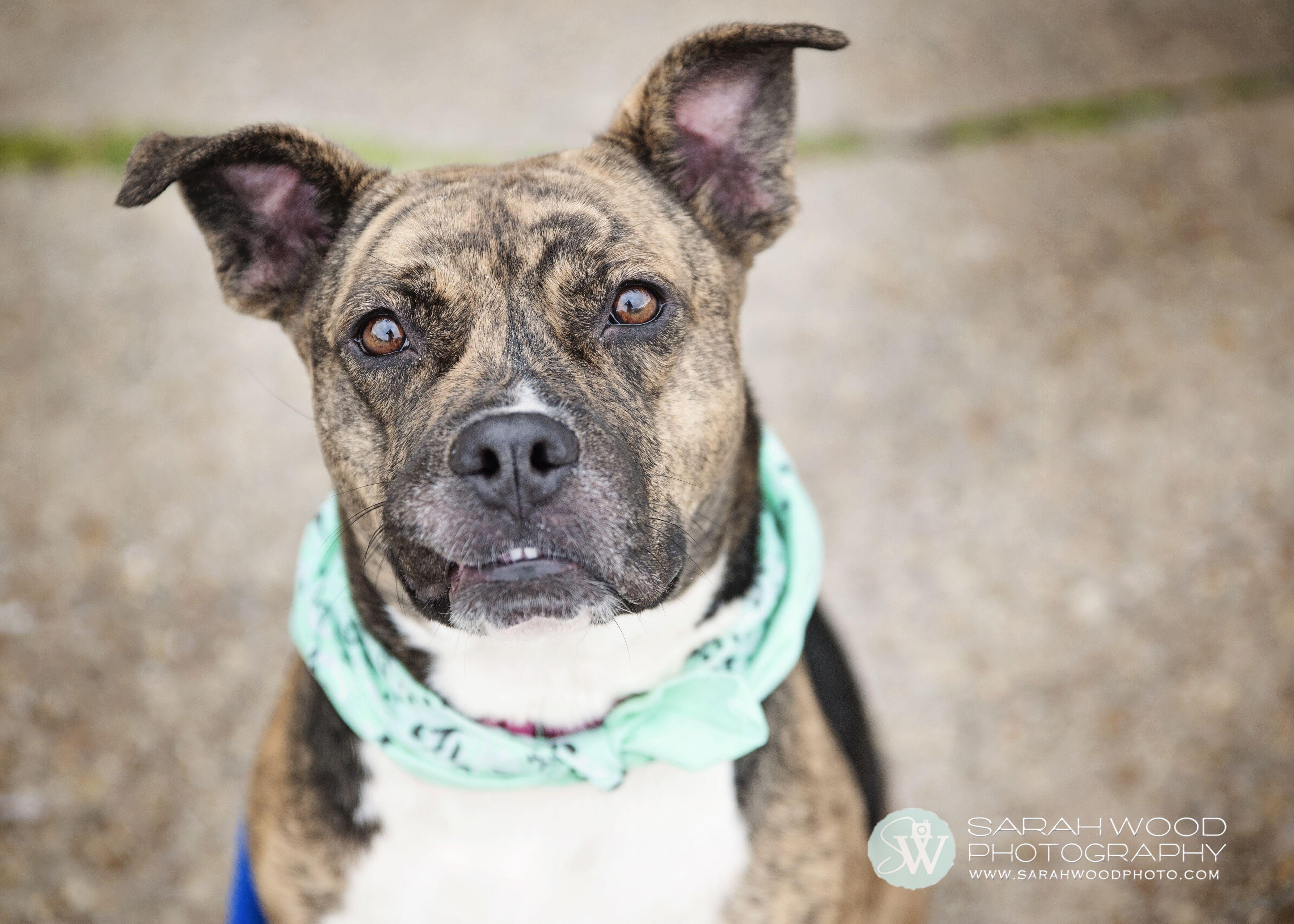 Maryland by Sarah Wood Photography Dog adoption, Woods