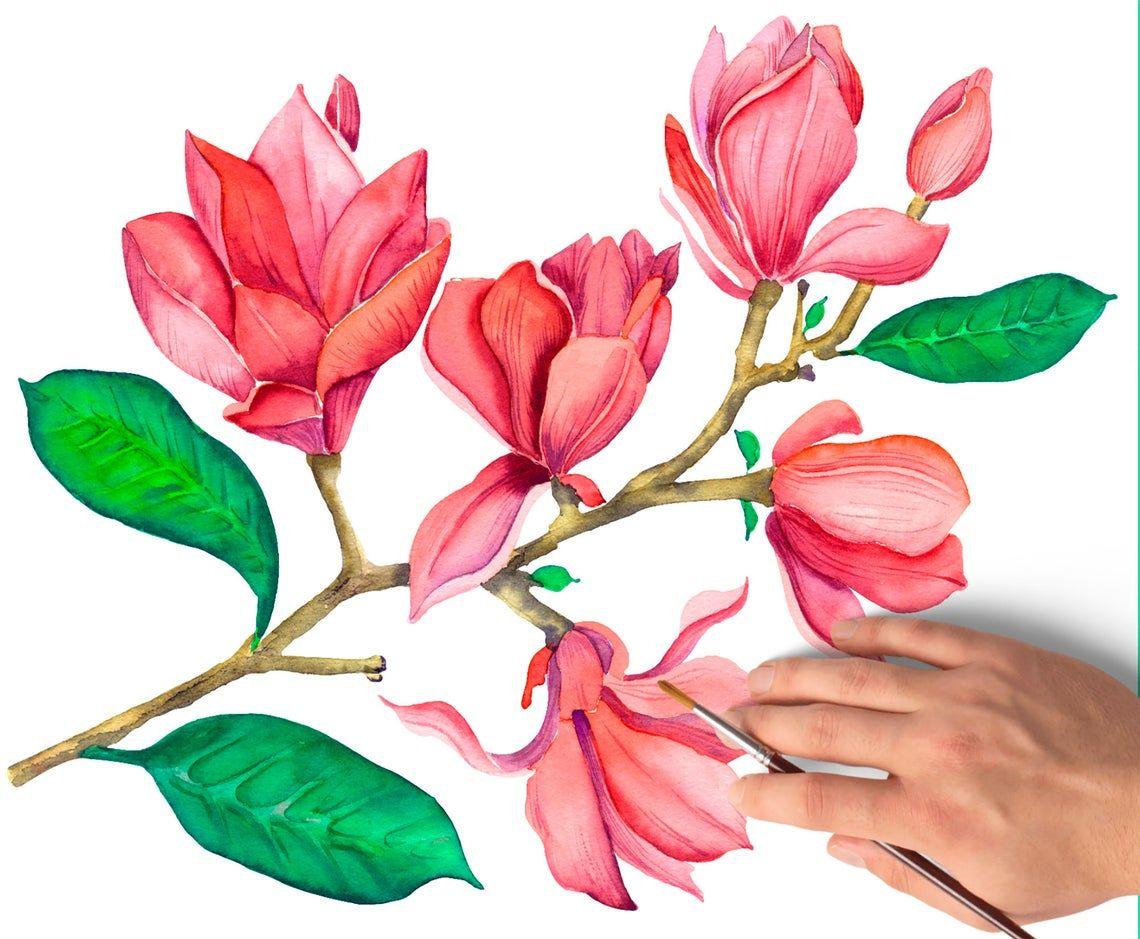 Watercolor Magnolia Flowers Clipart Summer Floral Clipart Etsy In 2020 Wreath Watercolor Watercolor Flowers Flower Illustration