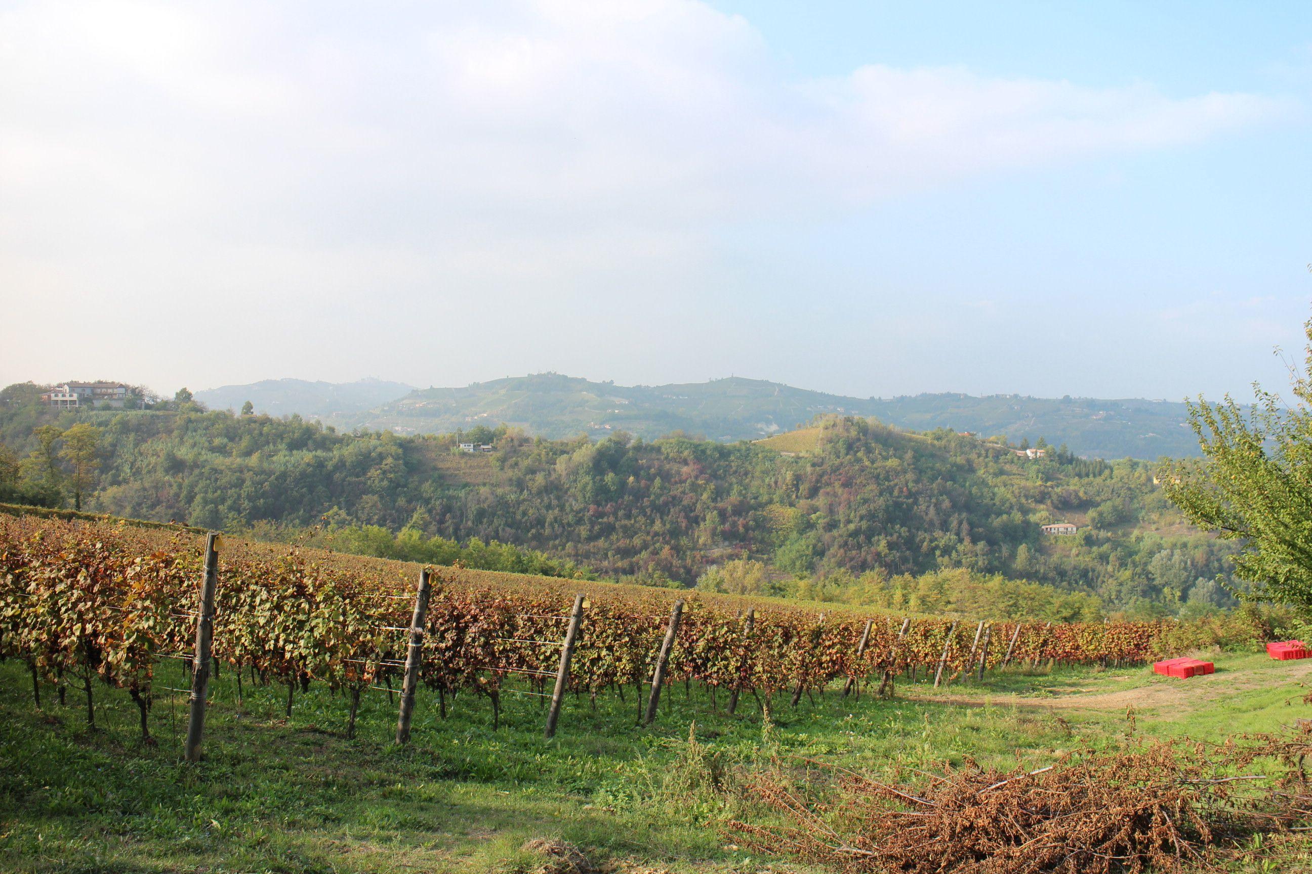 Piemonte wineyards, Italy