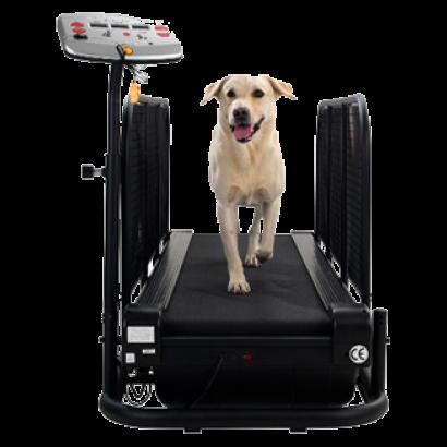 Pin On Dog Treadmill Antics