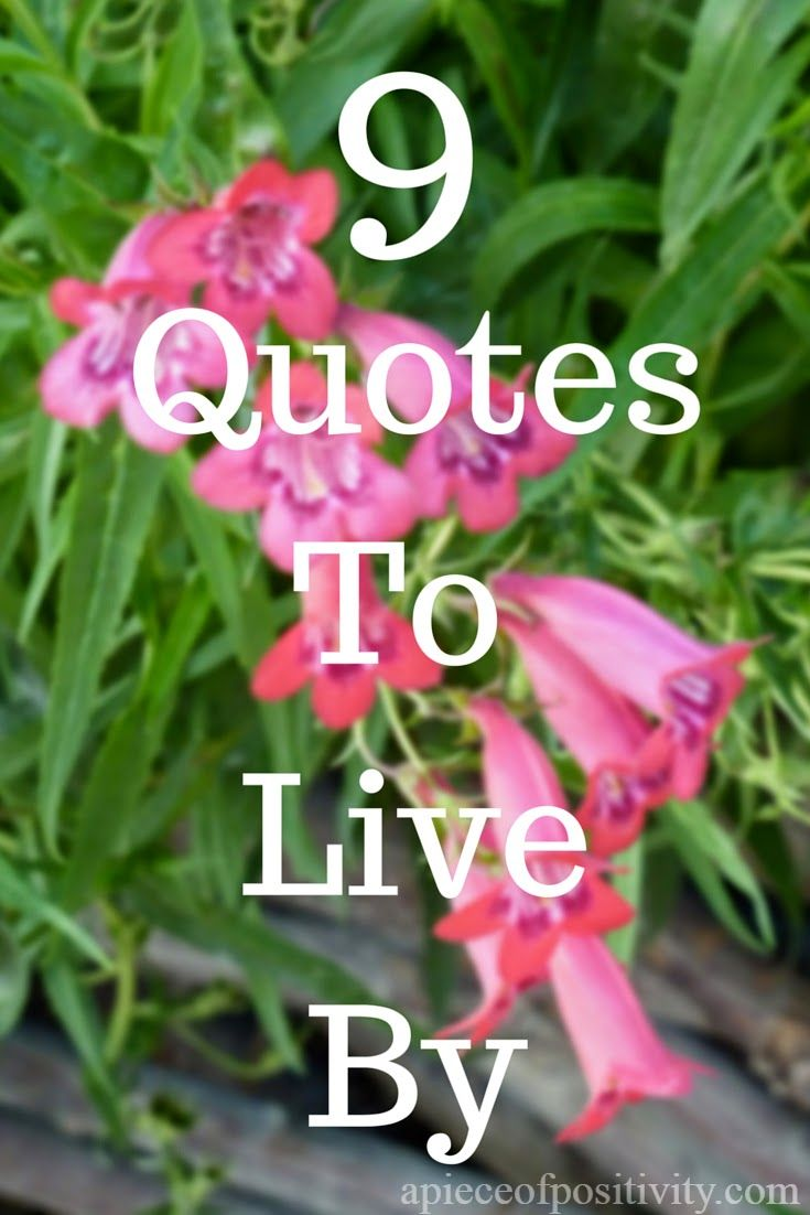 A Piece of Positivity | 9 Quotes To Live By -these are some of my favorite quotes and phrases for daily motivation and inspiration :)
