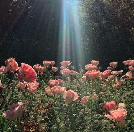 Garden Fairy Aesthetic 47 Ideas For 2019 Aesthetic Fairy Garden Ideas In 2020 Fairy Garden Plant Aesthetic Nature Aesthetic