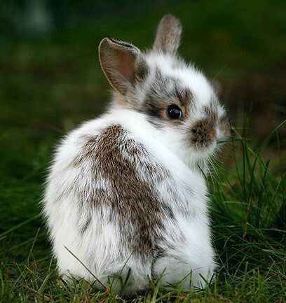 Snow-shoe bunny! I have one in my yard! | Cute bunny, Cute ...