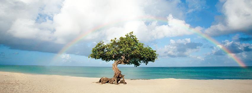 Tipico panorama dell'isola di Aruba!