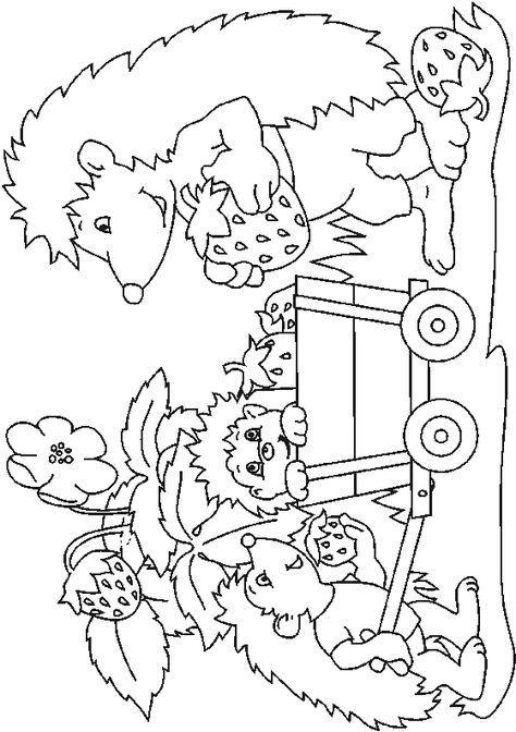 igel malvorlagen …  igel ausmalbild malvorlagen tiere