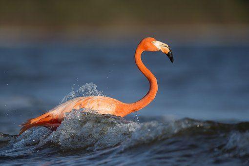 animal pássaro penas flamingo flamingo pinterest flamingo
