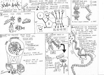 biomolecules  nucleic acid coloring sheet