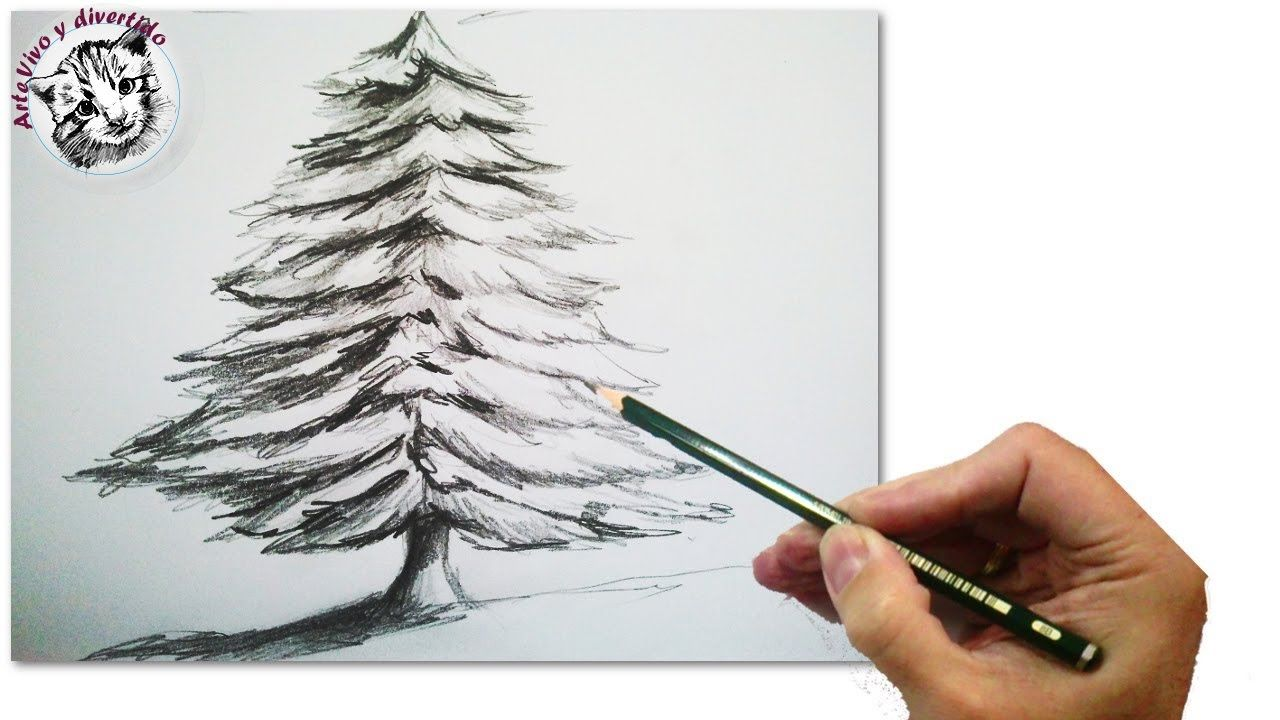 Como Dibujar Un Abeto O Arbol De Navidad Realista Paso A Paso A Lapiz T Arbol A Lapiz Dibujos A Lapiz De La Naturaleza Arboles Dibujos A Lapiz