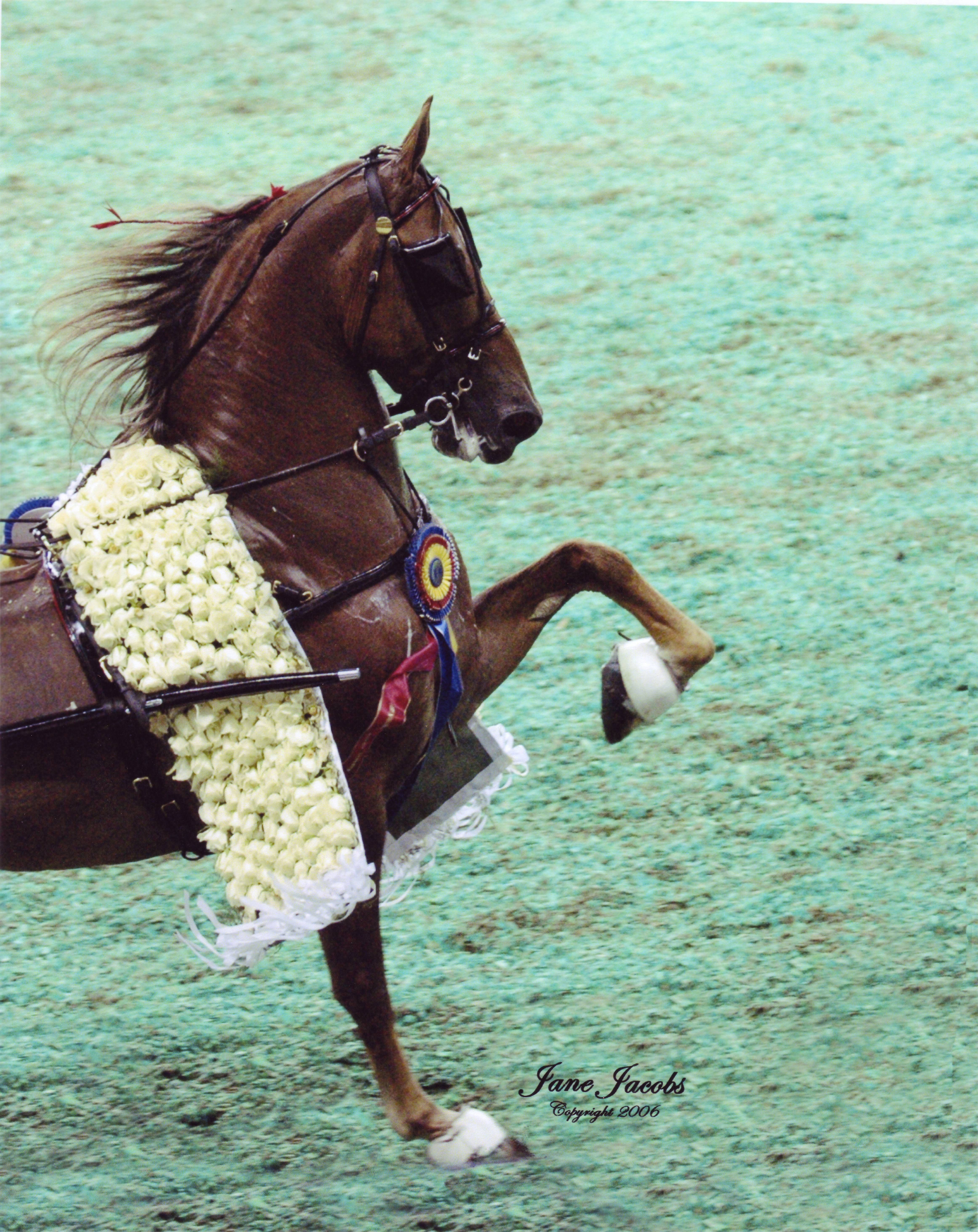 Dog Breeds. WGC CH Callaway's Coyright...American Saddlebred Kentucky Horse  Farms, Dressage Saddle,