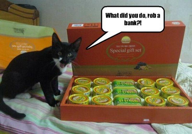 cat birthday cards amazon