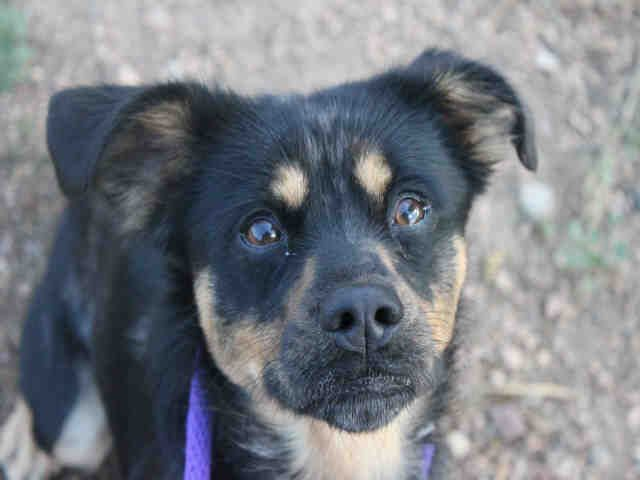 Adopt A Pet In Colorado Springs Pets Adoption Humane Society