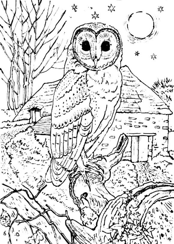 Barn Owl Coloring Pages Print | Kleurplaat | Pinterest | Owl, Adult ...