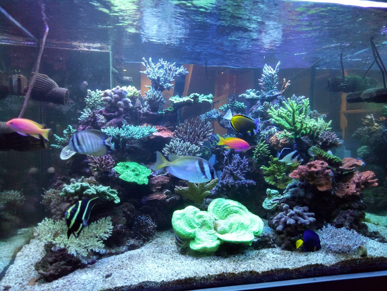 Sps Tank Aquarium Lautan Air