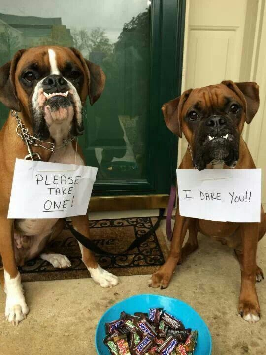 Do You Feel Lucky Well Do Ya Punk Boxer Dogs Funny Boxer Puppies