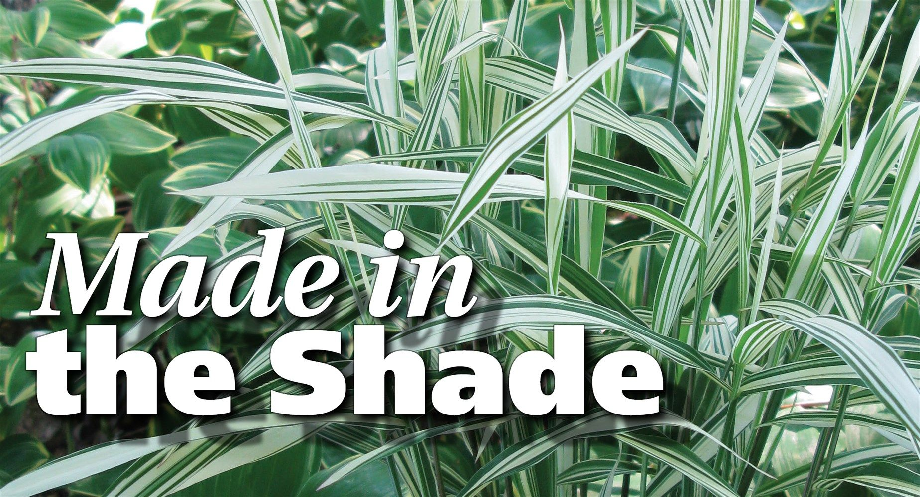 Common Ornamental Grasses Its a common misconception that shaded gardens cant support its a common misconception that shaded gardens cant support ornamental grasses several selections workwithnaturefo