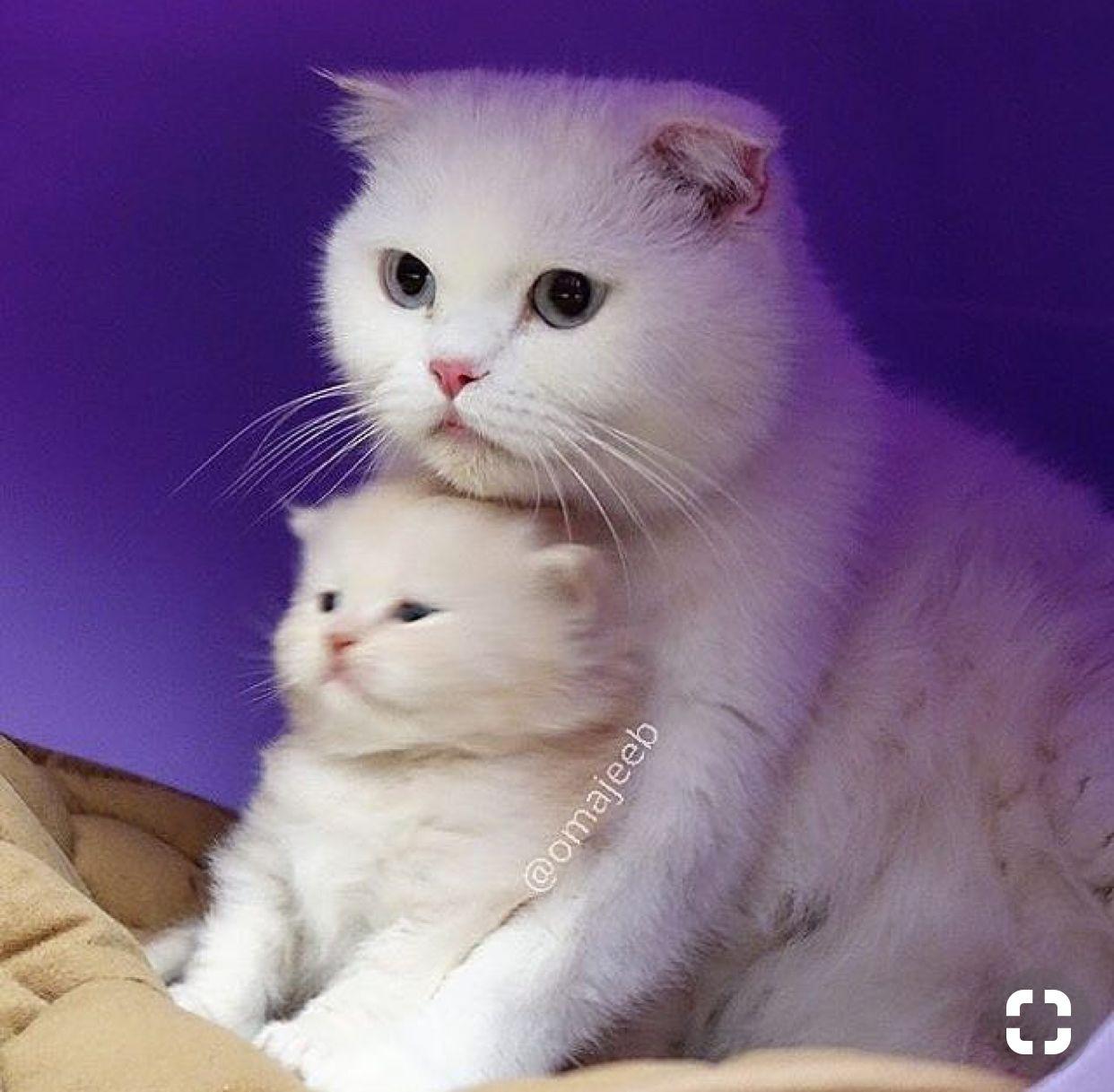 Pin by maggiehou on Melt Kittens cutest, Cute cats, Cute