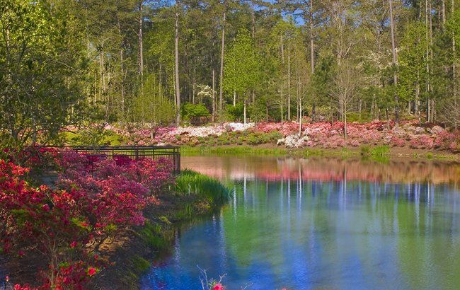 Much more than gardens you 39 ll find world renowned golf - Callaway gardens festival of lights ...