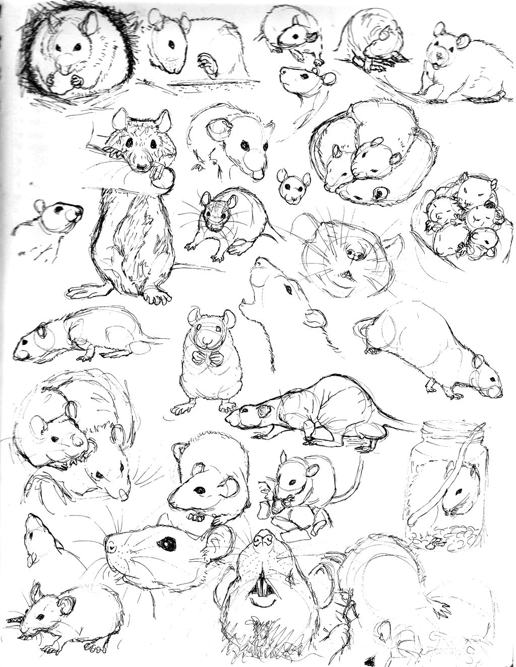 Uncategorized Drawing Of A Rat rat sketch practice 9 by never mor deviantart com on to drawing rats i have been sketching as many pictures of them can find pen and ink in my book if have