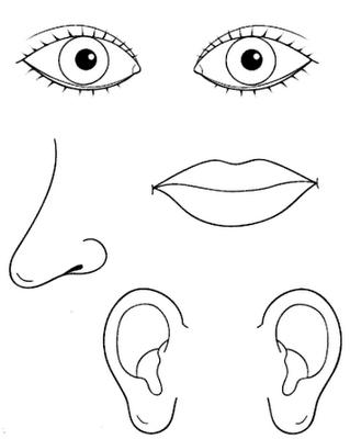 Éléments du visage | Schéma corporel | Pinterest | Kinder lernen ...