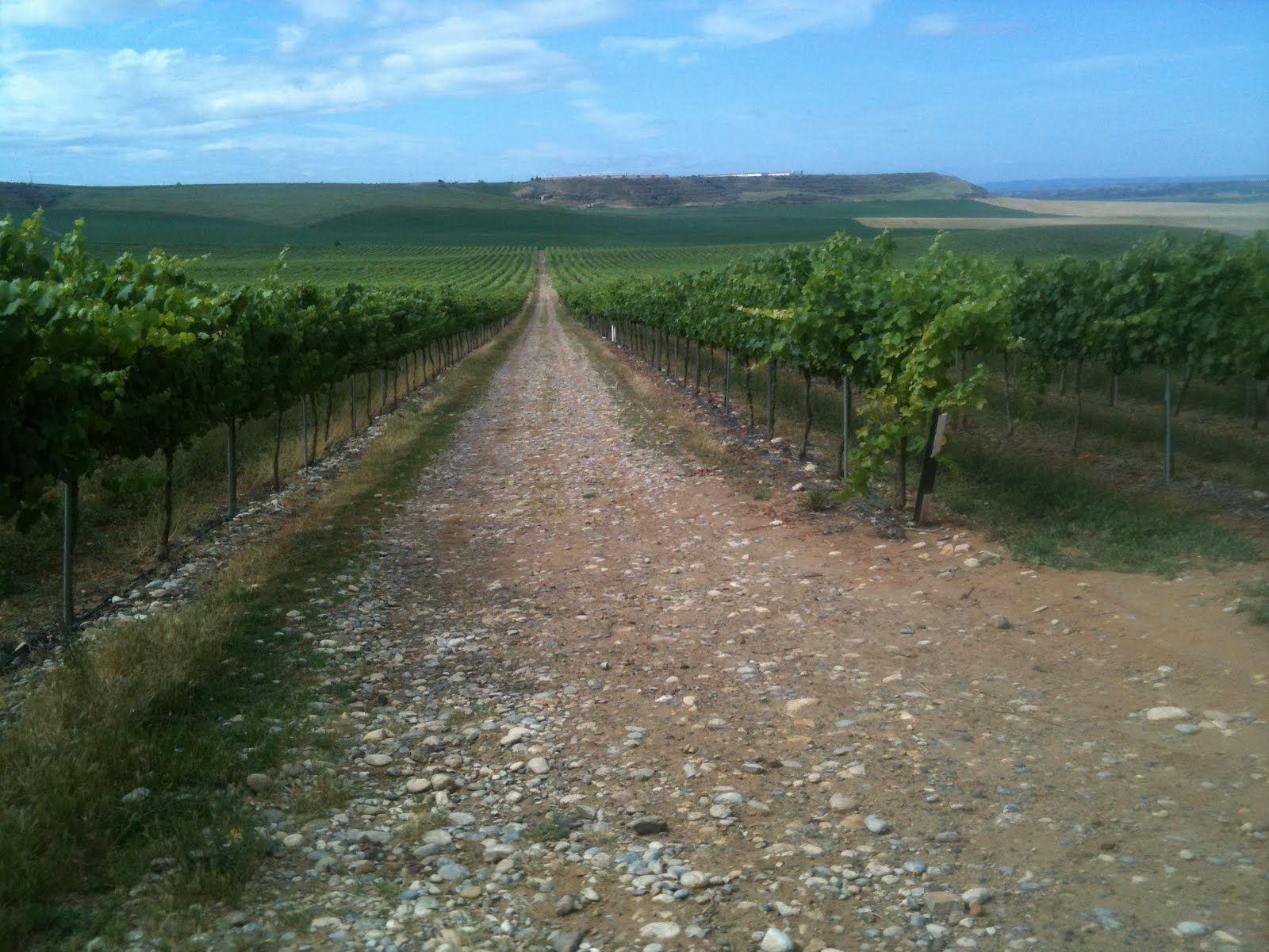 Codorniu cava vineyard near Barcelona. Spent the day there last fall.