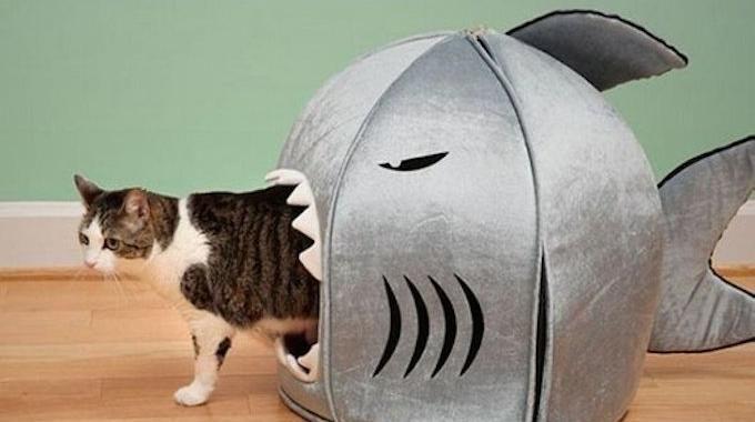 Une maison pour votre chat pas ch re qu 39 il va adorer - Panier pour chien fait maison ...