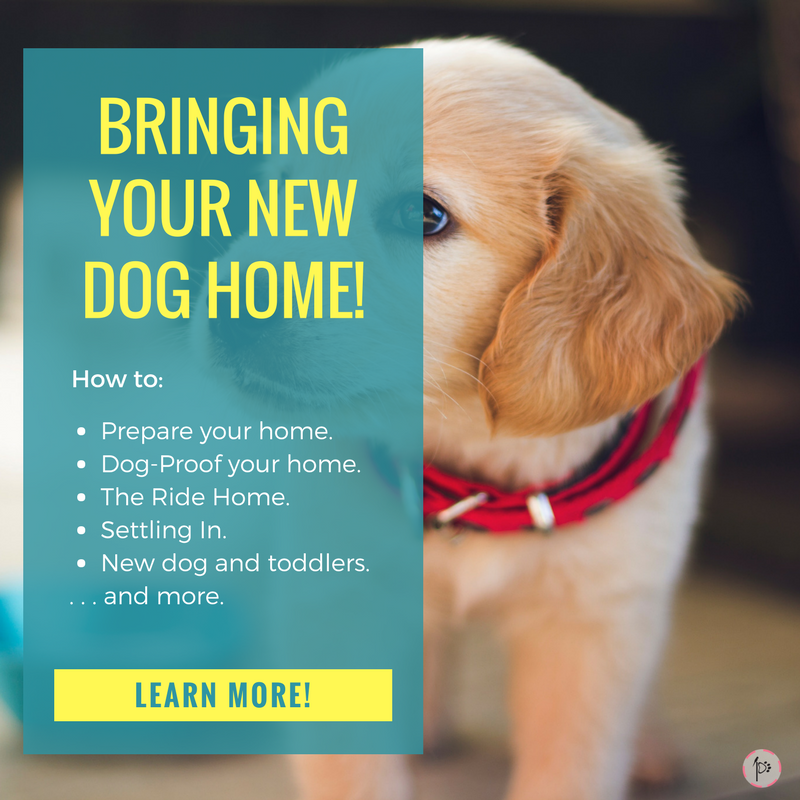 Bringing Your New Dog Home Learn How To Prepare Proof What Do On The Ride Help Settle In And More